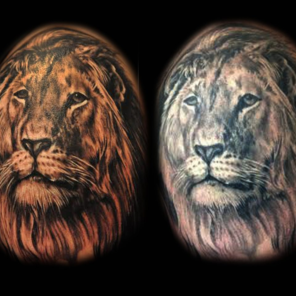 Jason Adkins – Lion – fresh-healed 8 x 10 300 dpi